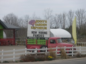 Now Hiring...Pansies?
